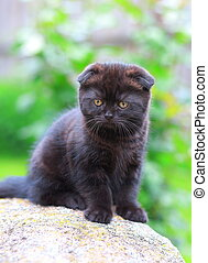 Chocolate kitten sitting on stone on green background