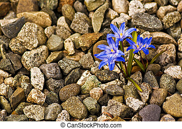 Spa Wellness  - Fragrant flowers emerge from a stone garden