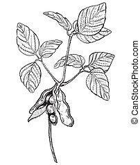 soy twig - engraving style drawing