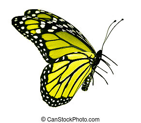 Yellow butterfly , isolated on white