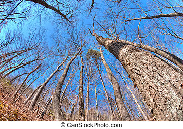 Winter woodland - Fisheye view of woodland in winter against...