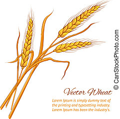 Ears of wheat Vector illustration