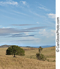 Solitary Australian fig tree with blue cloud sky landscape