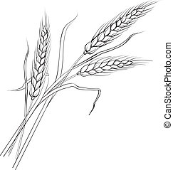 Ears of wheat. Iloated over white. Vector illustration.