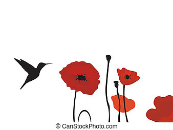 hummingbird - vector hummingbird and poppies