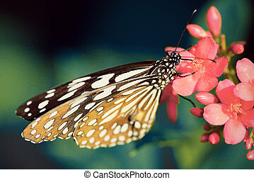 beautiful butterfly sitting in the flower vintage tone style...