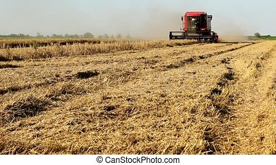 combine work in field in spring summer time