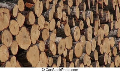 Large stack fresh cut wood logs