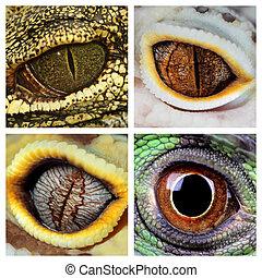 reptiles, ojos
