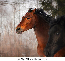 Horse portrait - Beautiful Horse running portrait at sunset...