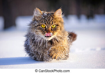 cat in winter - cat with big yellow eyes in winter