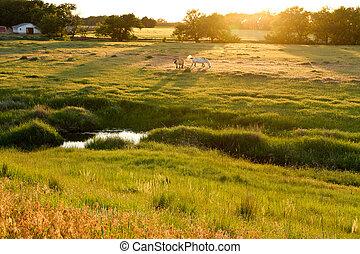 Kansas pasture at sunset, horses