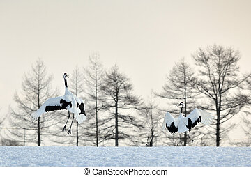 Two Red-crowned Cranes in courtship at sunrise.