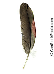 isolated parrot feather