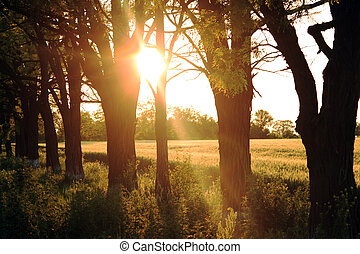 Countryside on sunset