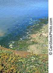 Green Algae - Green algae growing on the water\\\'s surface.