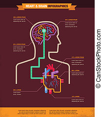 Brain and heart connected infographic - Brain and heart...
