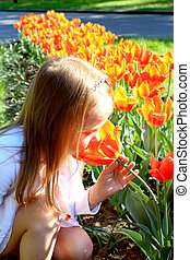 little girl smells tulips on the flower-bed - little girl...
