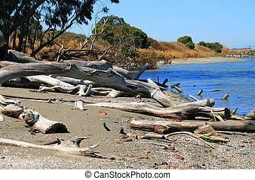 Driftwood - Close up of a driftwood on a shore.
