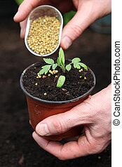 Fertilizing young plant