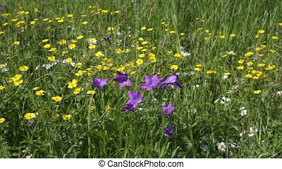 Wildflowers - Forest clearing with wildflowers