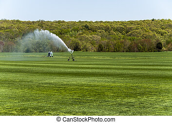 Irrigating The Sod