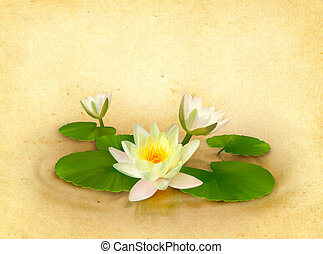 Floral card with beautiful water lily drawing on textured...