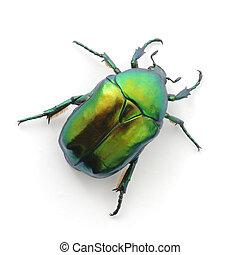 verde, escarabajo
