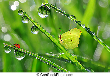 dew with butterfly and ladybird - fresh morning dew with...