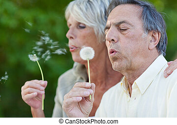 Senior Couple Blowing Dandelion In Park - Closeup of senior...
