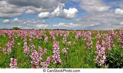 Beautiful flowers in the wind
