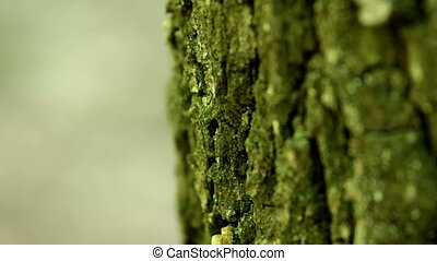 Small caterpillar on the tree trunk