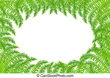 Fresh spring green Fern leaf isolated on white background.
