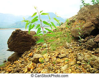 Plant growing on rocky area