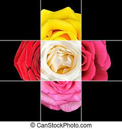 colorido, rosa, flor, mosaico, diseño