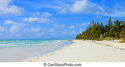 tropical beach in bahamas - empty tropical beach in the...