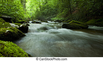 flowing river in forest