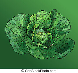 Heads of Cabbage Close Up - Cabbage Painted In the Style of...
