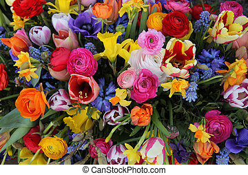 Spring flowers in bright colors - Spring Flowers in a...