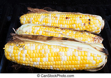 Grilled sweet corn BBQ - Three seet corns grilled on a BBQ