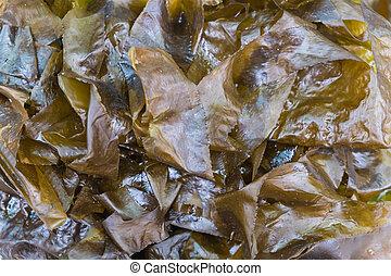 japanese seaweed - japanese fresh seaweed