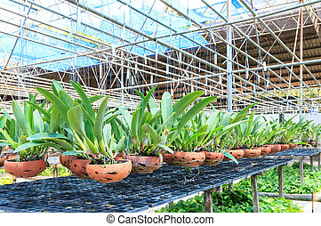 Agriculture orchid farm at thailand
