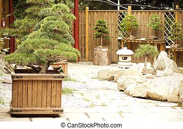 tres, bonsai, jardín