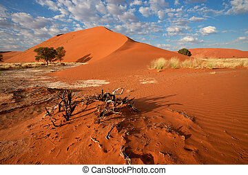 Desert landscape with grasses, red sand dunes and African...