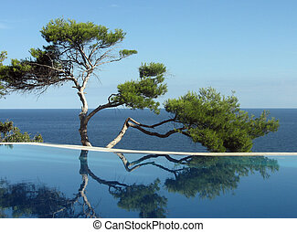 Pine-tree, pool and sea - Pine near pool on the bank of...