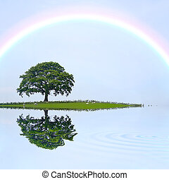 Oak Tree and Rainbow - Oak tree on an island field in summer...