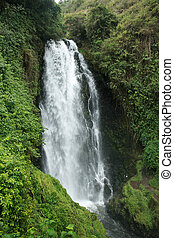 Peguche Waterfall and Green Plants - The Peguche Falls drop...