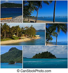 Tropical Montage - A tropical montage featuring scenes from...