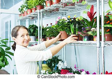 woman chooses  Primula or  hyacinth at  store