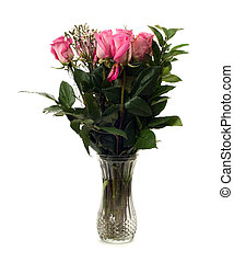 Dozen Roses - A dozen roses in a glass vase, isolated...